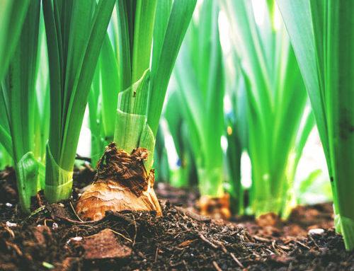 Il ruolo della sostanza organica